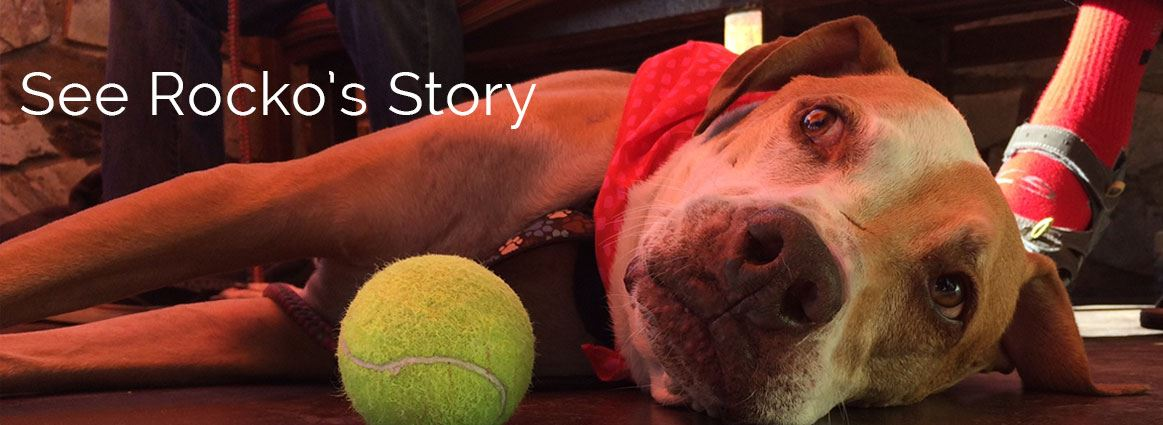 See Rocko's Story