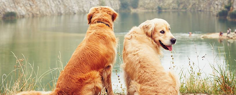dogs in front of water