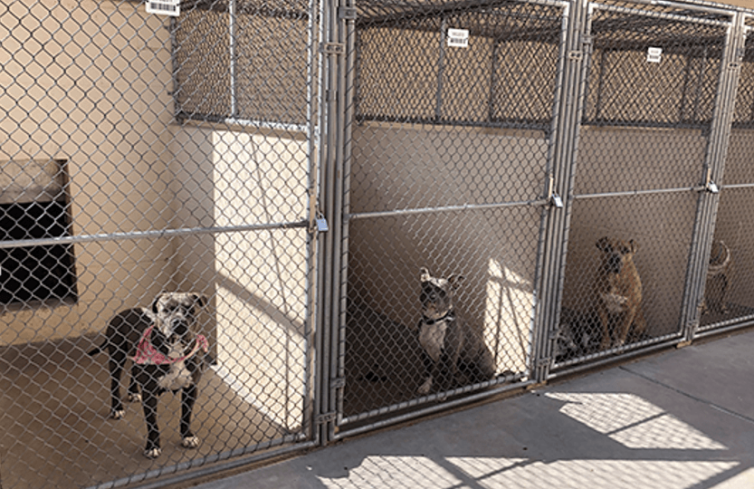 Dogs in kennels